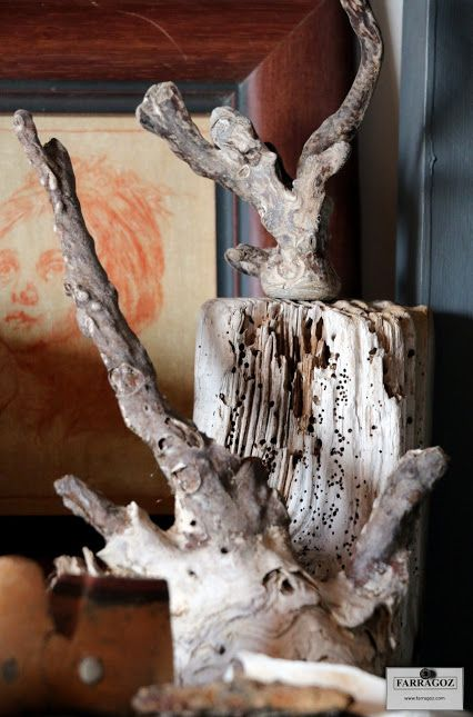 Collection of weathered wood and coral with beautiful patina against old sketch.